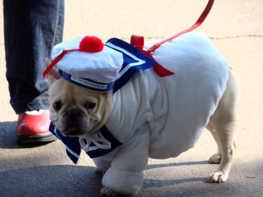 Stay Puft Ghostbusters Dog